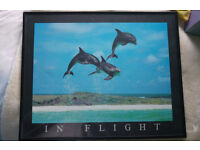 Dolphin in Flight framed picture
