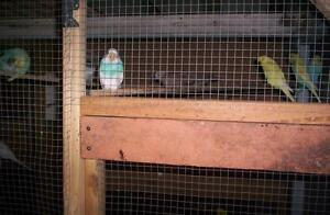 GIVE YOUR UNWANTED BIRDS THE CARE THEY DESERVE Carina Heights Brisbane South East Preview