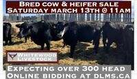 Bred Cow & Heifer Sale this Saturday 11am @ Whitewood Livestock