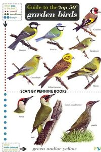 Laminated Field Guide - TOP 50 BRITISH GARDEN BIRDS    BRAND NEW LATEST EDITION