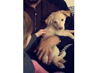Puppy needs rehoming