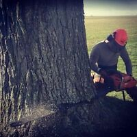 Non-Technical Tree Removal, Tree Pruning & General Chainsaw Work