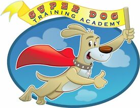 Established, Professional, Reliable Dog Walker & Cat/Pet Sitter Available. Insured& 1st Aid Trained