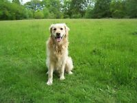 Experienced Dog Walker with Excellent rates in the WD (watford) area and surrounding