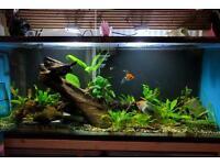 """fish tank 4ftx20""""x15"""""""