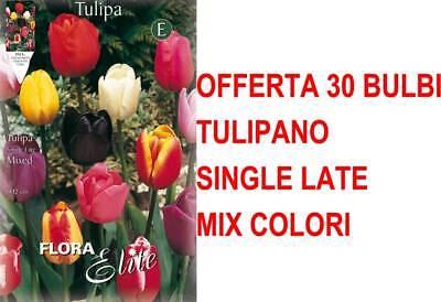 OFFERTA 30 BULBI AUTUNNALI TULIPANO SINGLE LATE MIX DI COLORI  BULBS BULBES