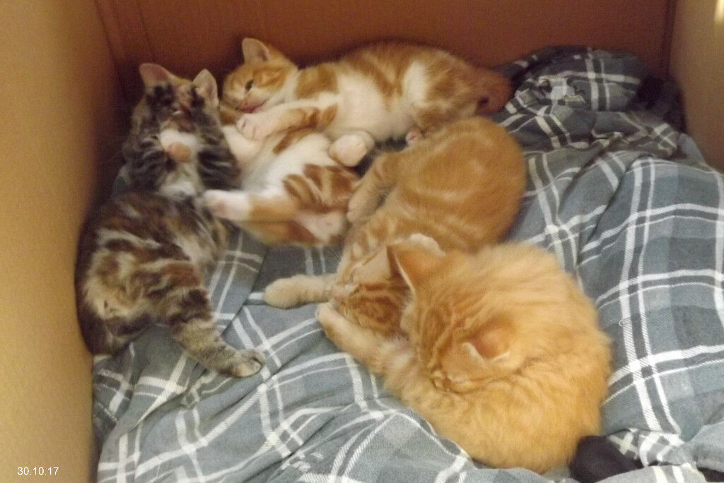 Pretty Kittens for sale.