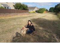 Pet sitting service - West Suffolk area
