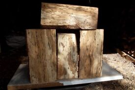 large spalted beech blocks for wood carving