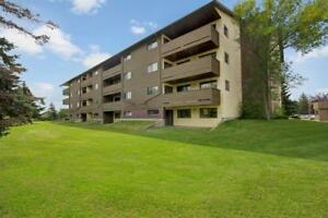 Extra Large 2 bedroom Northern Lights Suite- Book in advance!