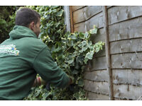 Garden maintenance and tree surgery services in Croydon, London