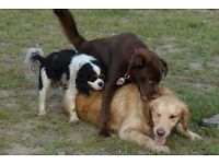 PROFESSIONAL DOG WALKER WIMBLEDON, PUTNEY, BARNES 1 -1.5 HR WALK £10.00