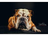 Pet portrait photography in Ipswich