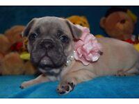 French Bulldog Kc Reg