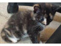 very lovely kitten for the good family at 80