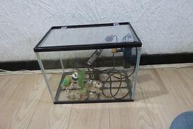 Beginners tropical fish tank setup