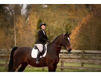 Professional Equine and Pet Photography
