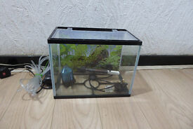 13L Tropical fish tank setup