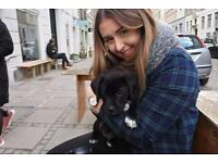 Experienced dog walker (Stratford/Leyton)