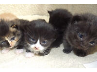 Three cute kittens looking for a new home