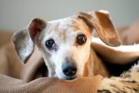 DOG SITTING IN MILTON