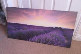 Lavender fields canvas art print