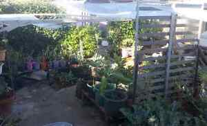 Share with 2 others, cat, chickens and big vege garden Embleton Bayswater Area Preview