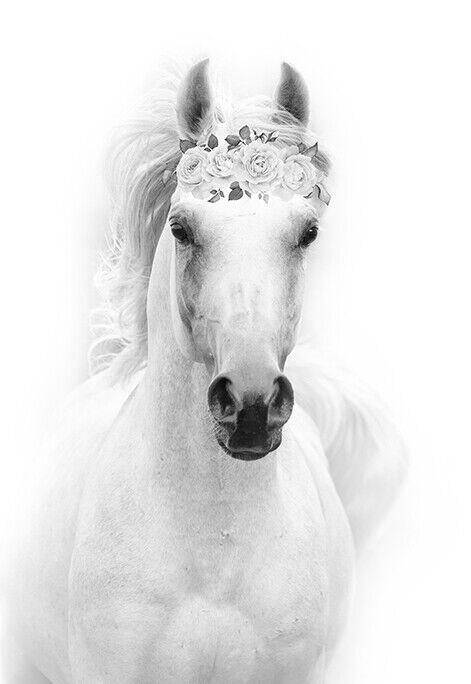 ART PRINT POSTER PHOTO ANIMAL BLACK WHITE HORSE MANE EYE LFMP0456