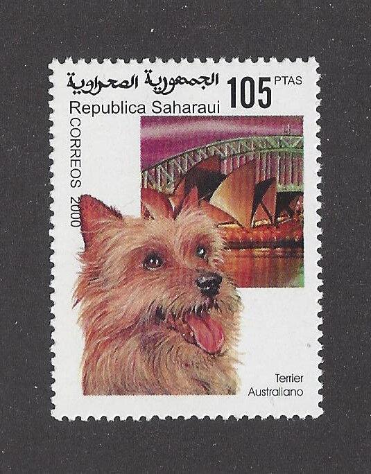 Photo Head Portrait Postage Stamp AUSTRALIAN TERRIER DOG Spanish Sahara MNH