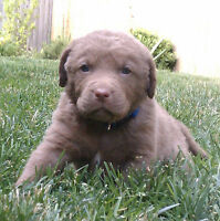 Red Dog Training - Puppy Classes - NEW DATE & TIME