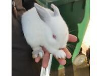 White bunnie