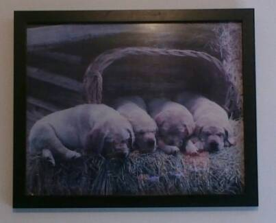 LABRADOR PUPPIES IN FRAMED PICTURE