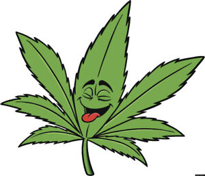 Looking for a place to rent that is marijuana friendly