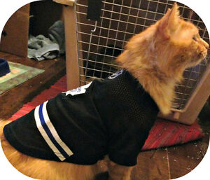 MEET BUDDY...MAINE COON X & MAPLE LEAF FAN..PLS READ MY STORY
