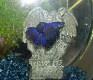 New assorted colorful Betta Fish just arrived!