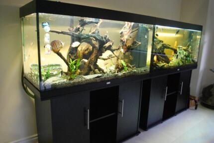 Perth Pond & Aquarium Cleaning Services Maintenance Koi Fish Manning South Perth Area Preview