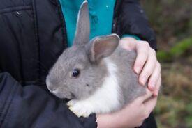 Rabbits - 11 weeks old