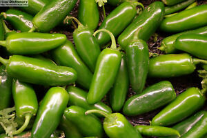 Hot Pepper - Chilli - Jalapeno - Appx 50 seeds