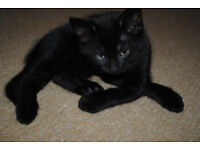 Sweet female kitten in London area looking for a good and loving home