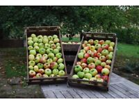 Rustic vintage wooden Apple crate tray box store