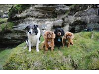 Glenheart Dog Walking, Pet Services and Agility Training