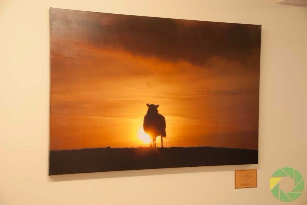 1080 x 730mm Canvas Print, The Lonely Sheep