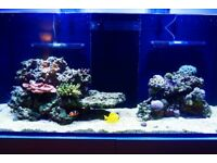 Marine Reef LIVESTOCK for 250/350 Liters system (Live Rock, Fish & Corals - Only selling as a lot)