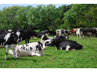 Experienced help required on busy dairy farm