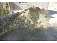 FREE wood chippings (Lawsons Cypress)