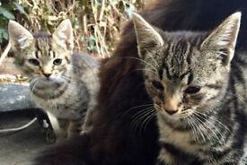 Beutiful kittens for sale