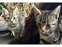 Beutiful kittens for sale