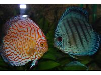 Assorted Discus for sale £18 each