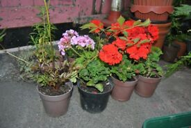 12 POTS OF PLANTS FOR ONLY £10