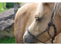 12.2hh 9yo superstar pony for part loan/ sharer